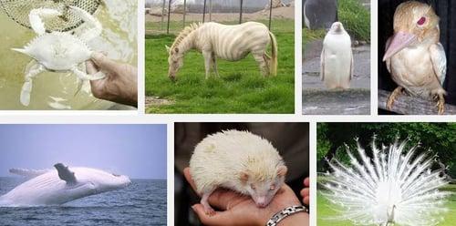 Animales2520Albinos