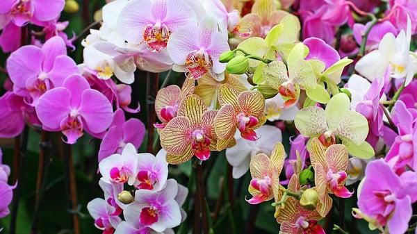 Láminas y Aceros flores2