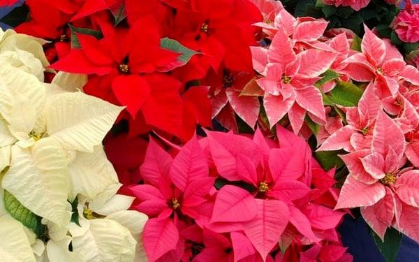 Láminas y Aceros flor1